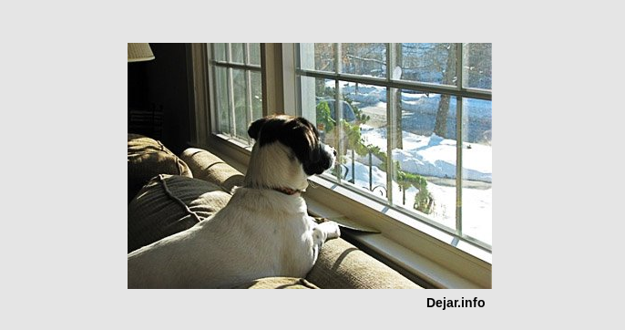 Cómo dejar al perro solo en casa